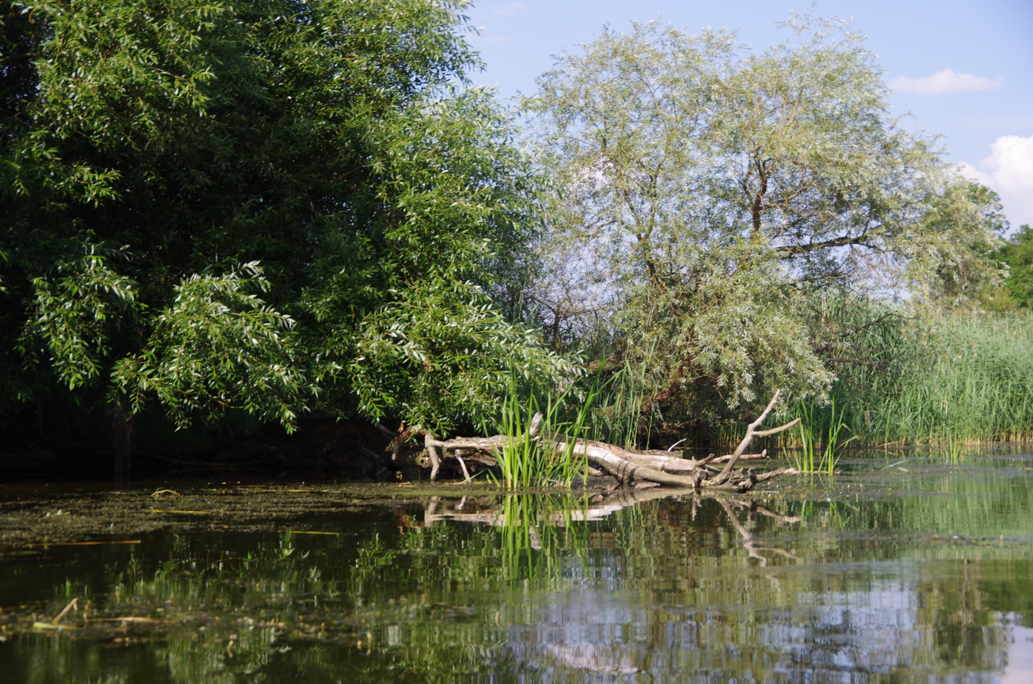 kayaking-odra-east-and-west_15-51-53_25-07-2016