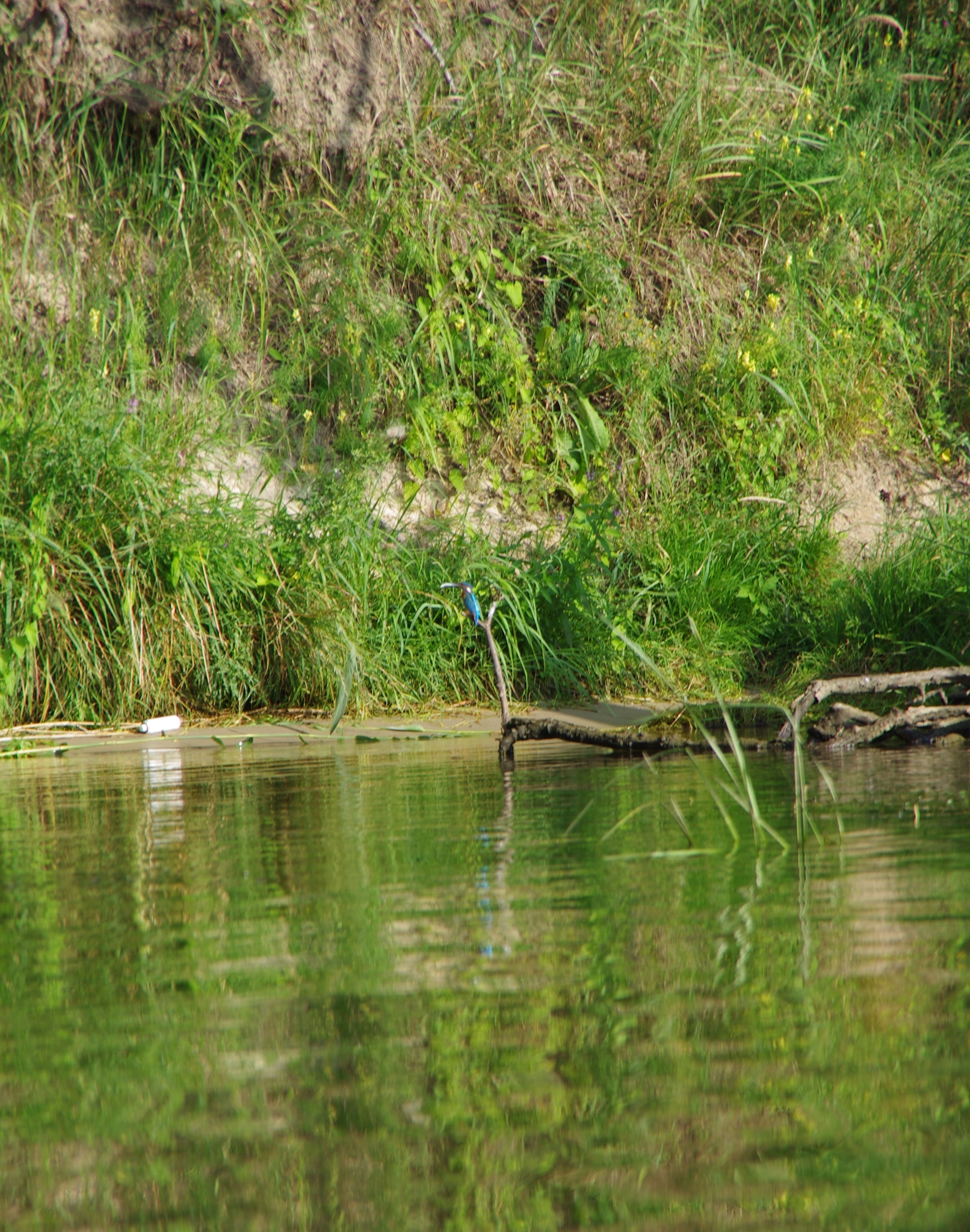 kayaking-odra-east-and-west_16-42-08_25-07-2016