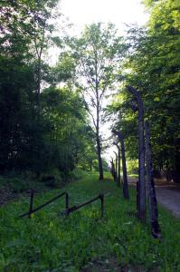 buchenwald-2014