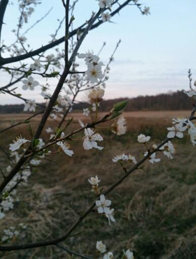 Frühling im Ilmenautal